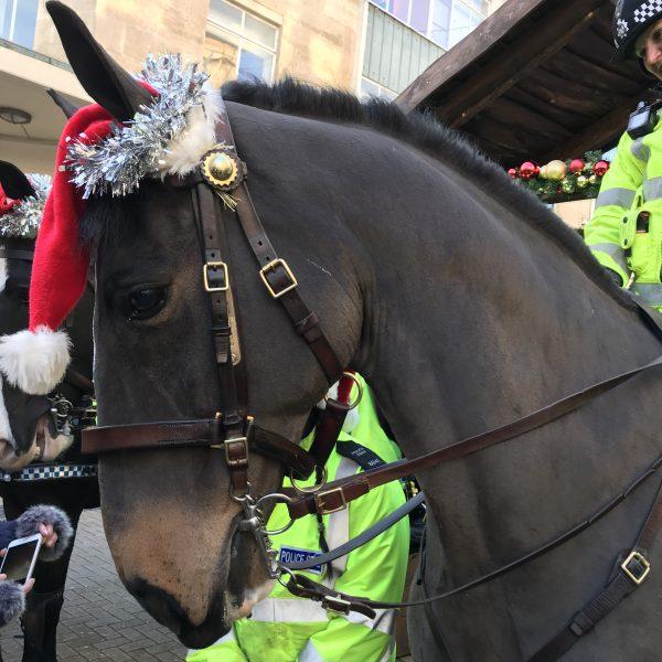 Police Horse Broadmead